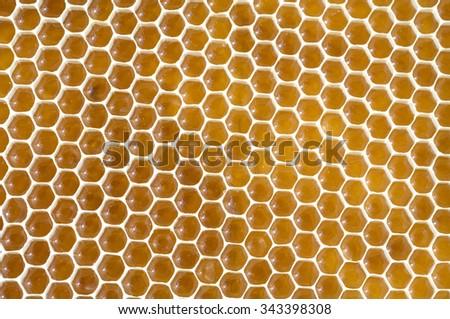 honeycomb; beeswax; wax - stock photo