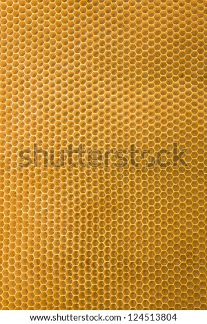 Honeycomb cells close-up with honey - stock photo