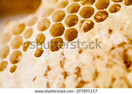 Honeycomb filled with honey - details
