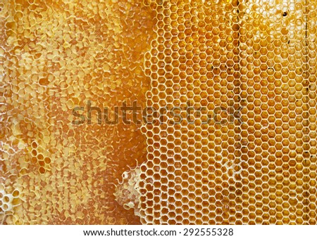 honeycomb filled with honey texture - stock photo