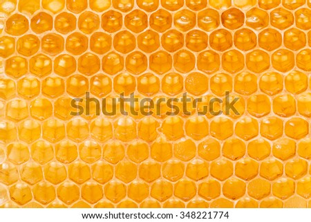 Honeycomb. High-quality picture. Macro shot. - stock photo