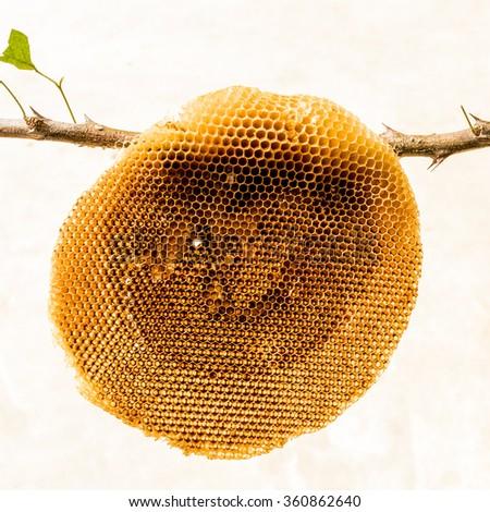 Honeycomb isolated - stock photo