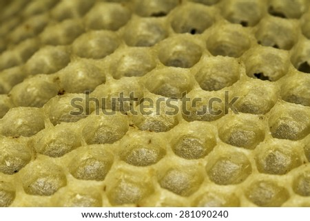 honeycomb macro - stock photo