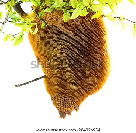 honeycomb natural - stock photo