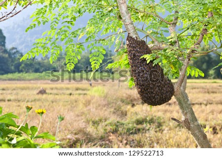 honeycomb on a tree.