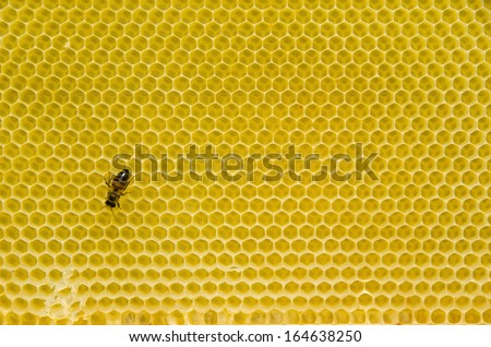 Honeycomb pattern with yellow empty cells in daylight