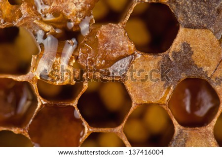 honeycomb texture in the photo