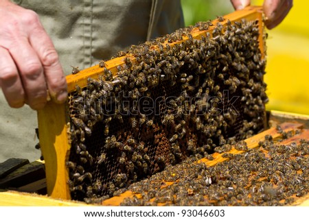 Honeycomb with bees and honey - stock photo