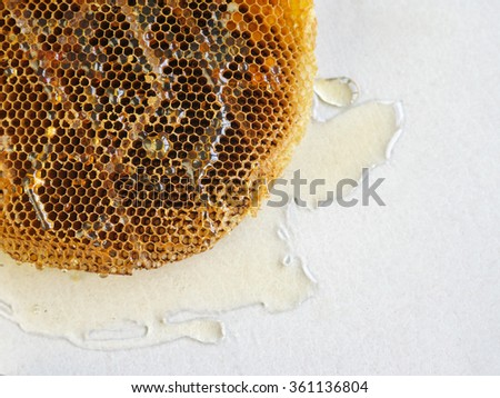 honeycomb with honey. - stock photo