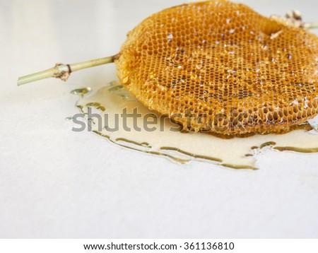honeycomb with honey. - stock photo