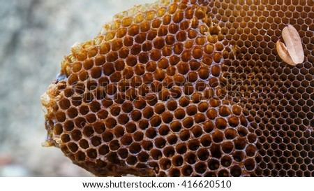 Honeycomb without honey or bees in front of grey background in natural surrounding.