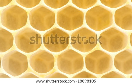 Honeycomb. Yellow clear hexagon background. Extremely close-up - stock photo