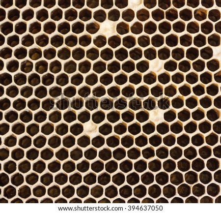 Honeycombs filled with honey closeup. In each cell of honeycomb the reflection of light in the form of an asterisk. Texture. - stock photo