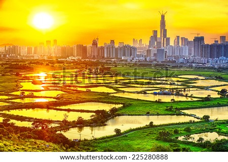hong kong countryside sunset, rice field and modern office buildings  - stock photo