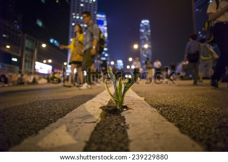 HONG KONG - OCT 15: The little plant is raised in the middle of the road in Admiralty in Hong Kong on October 15 2014.  - stock photo