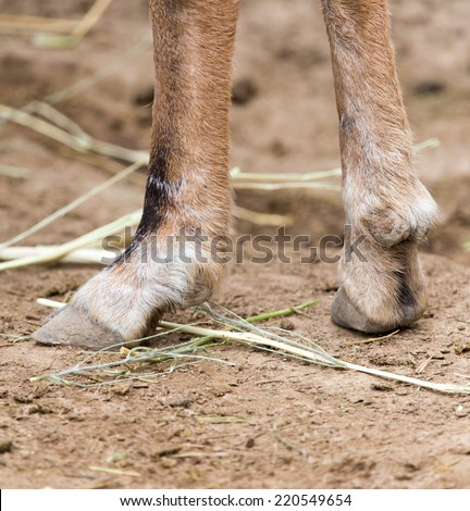 hooves - stock photo