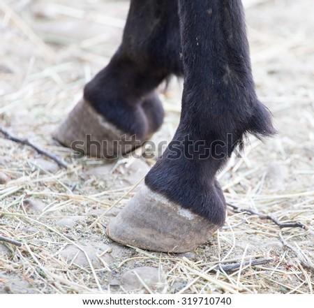 Four Legged Animal Stock Photos Royalty Free Images