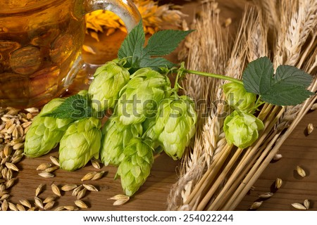 hop cones and raw material for beer production - stock photo