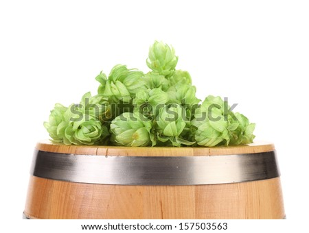 Hop flowers on a barrel. Isolated on a white background. Place for text.