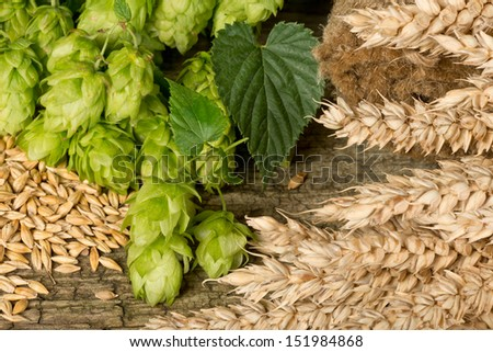 hops and barley - stock photo