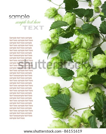 hops isolated on a white background - stock photo