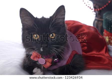 Horizontal Christmas themed image with a cute black kitten dressed up for the holiday.