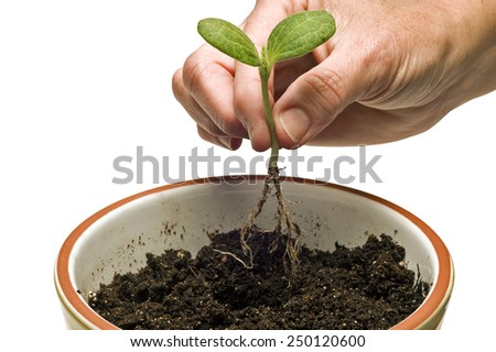 Horizontal Close Up Hand Getting Ready To Plant Young Seedling/ Time To Grow - stock photo