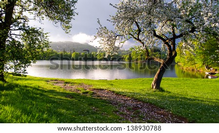 horizontal color image of a lake surrounded by blooming trees on a sunny day - stock photo
