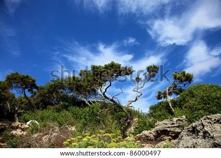 Horizontal color image of some trees on a hill. Blue sky and some clouds on the background. - stock photo