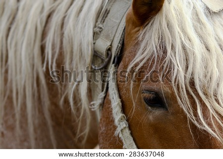 Horizontal color picture of a horse's head