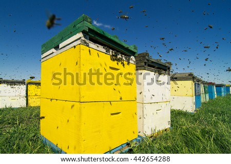 Horizontal front view of a row of colored beehives aligned in a field with bees swarming around - stock photo