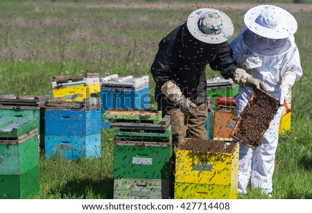 horizontal front view of two beekeepers in protection suit checking the honey combs with bees swarming around - stock photo