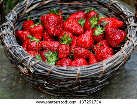 horizontal orientation close up of a dark woven basket with brightly colored fresh strawberries and copy space / Fresh Choices for Dessert - stock photo