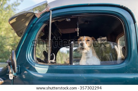 horizontal orientation close up of a small dog in the cab of a truck with the window down in summer / Animal Safety on Hot Summer days - stock photo