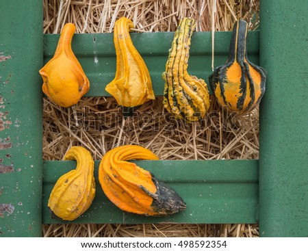 horizontal orientation close up of a variety of gourds hanging on a vintage metal bin, with hay in the background / Gourd Varieties on a Vintage Metal Bin
