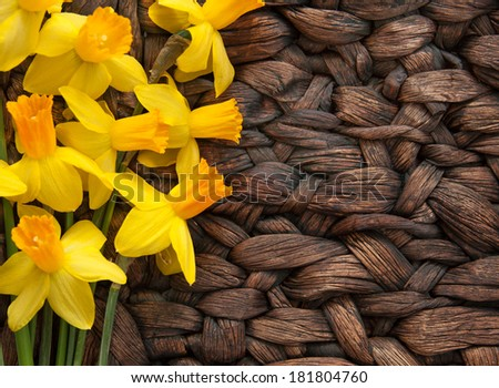 horizontal orientation close up of bright daffodils on a neutral, woven, textured surface with copy space on the right side / Daffodils on Woven, Textured Background - stock photo