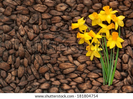 horizontal orientation close up of daffodils on a neutral, woven, textured surface with copy space on the left side / Daffodil Bunch with Woven Background - stock photo