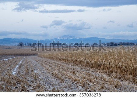 horizontal orientation color image of dried corn stalks in the foreground, with Long's Peak and mountains in the background / Corn fields and Long's Peak in Colorado - stock photo
