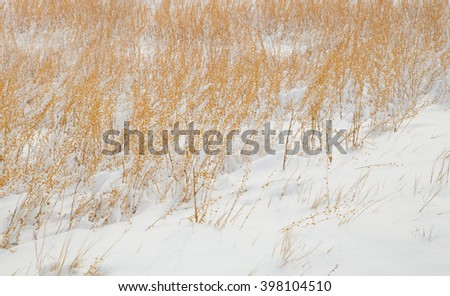horizontal orientation color image of dried grasses in fresh snow as a textured background with copy space / Fresh Snow with Dried Grasses in Winter - stock photo