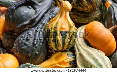 horizontal orientation of many colorful gourds with a variety of shapes and colors with copy space / Horizontal Gourds - stock photo