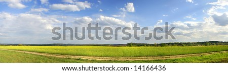 horizontal panorama of the yellow field with beautiful blue sky ant path