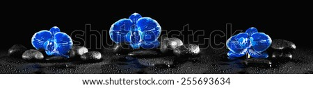 Horizontal panorama with blue orchids and zen stones on black background - stock photo