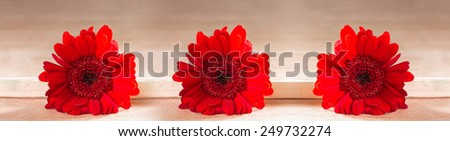 Horizontal panorama with red gerbera on a wooden background - stock photo