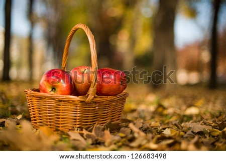horizontal  photo basket with apple on nature, autumn