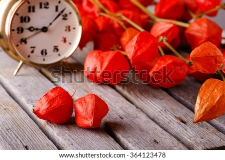 Horizontal photo with Couple of red gooseberry physalis blooms in front of several branches with the same flower and brass alarm clock placed on old grey wooden board.  - stock photo