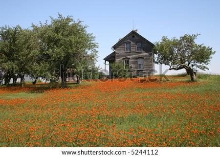 horizontal rustic farmhouse in summer - stock photo