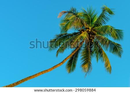 horizontal shot - green coconut palms and blue sky - stock photo
