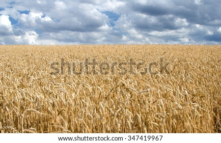 Horizontal shot of landscape consisting of wheat field and cloudy sky.