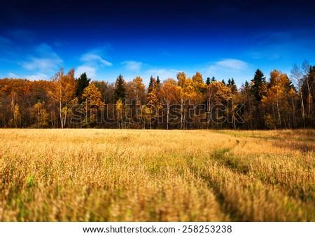 Horizontal vivid autumn landscape forest field road background backdrop - stock photo
