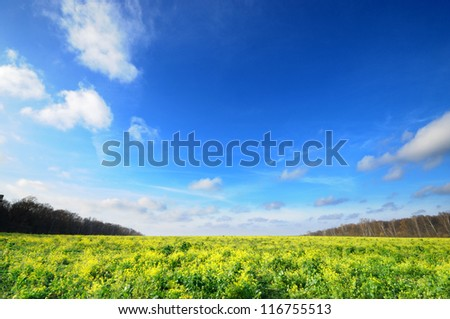 Horizontal Wide angle blue sky with flower meadow Yasnaya Polyana Lev Nikolayevich Tolstoy's home town, tula, russia.